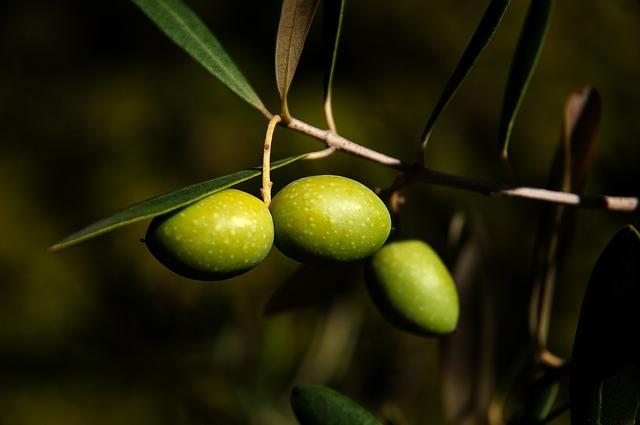 ile kalorii ma oliwa z oliwek sprzedawana w polsce